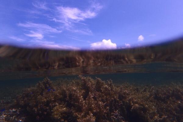 ドームポートなしで半水面を撮影した例2
